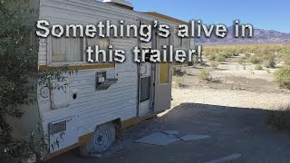 Something Is Alive In This Abandoned Trailer!