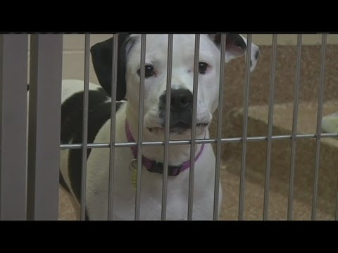 Proposed law would increase animal cruelty penalties