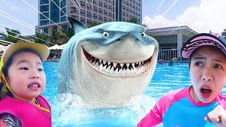 상어가 수영장에 나타났다! 호텔 리조트에 상어가 있어요…