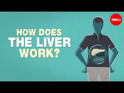 What does the liver do? - Emma Bryce