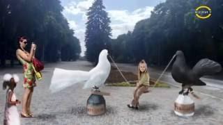 Выставка голубей, Крюковские голуби, Кременчугские голуби, голуби Андрея Изюмова