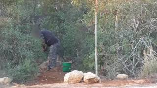 Men shown illegally trapping and killing songbirds on Cyprus, 2016 - Clip 4