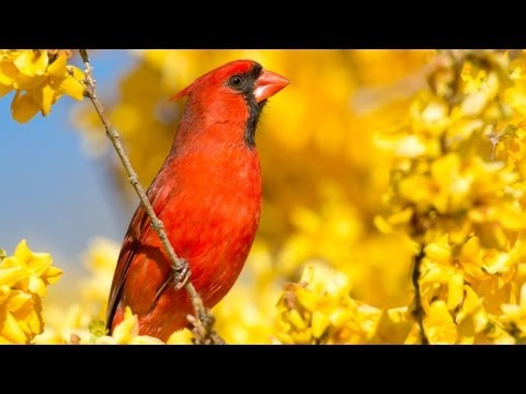 How to Photograph Birds with Any Camera using a Hunting Blind and Bird Calls