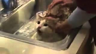 會說巧克力的貓 Cat speaking chocolate in Chinese