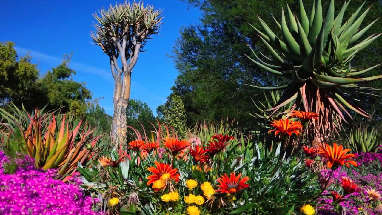Taft Botanical Gardens In Glorious Springtime 2016 Ojai Ca Youtube