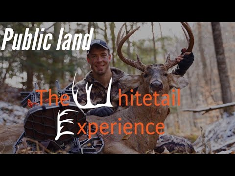 Bowhunting Public Land Ohio Buck 2019