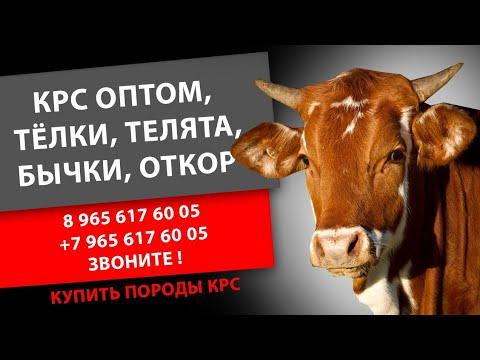 Продажа сельскохозяйственных животных в крыму (арк). В сервисе объявлений olx. Ua легко и быстро можно купить сельхоз животных. Покупай сельхоз животных. Продам мелкий и крупный рогатый скот. Животные » сельхоз.