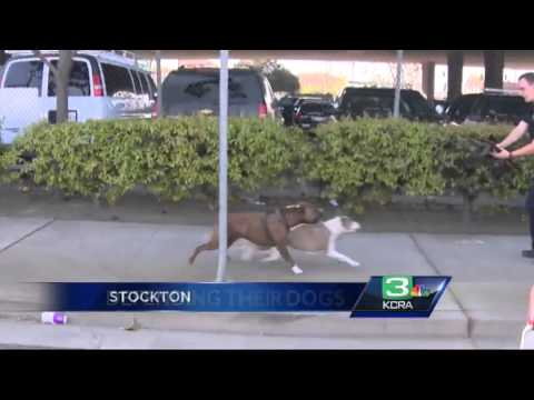 Owner of attacking pit bulls speaks out