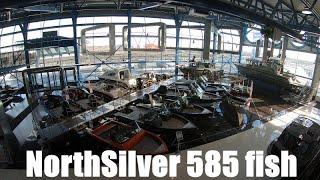 Обзор покупки катера NorthSilver PRO 585 Fish (как сэкономить, в чем отличие от 545 fish)