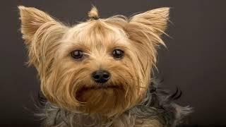Самые спокойные породы собак для детей и квартиры!