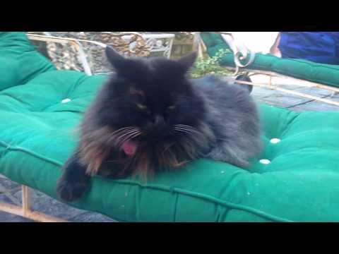 Cat Gigi