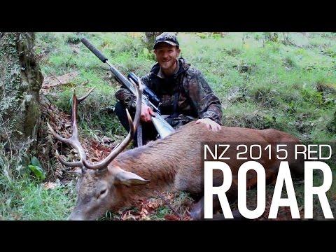 HUNTING RED DEER - Kaimai Roar 2015 - New Zealand