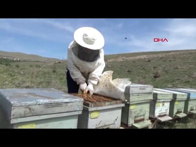 Arı sütünün kilosu 10 bin TL
