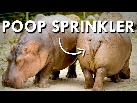 Africa's Deadliest Poop Sprinkler