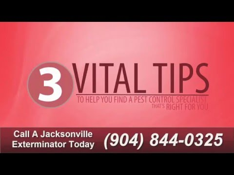 Pest Control Services In Jacksonville, FL