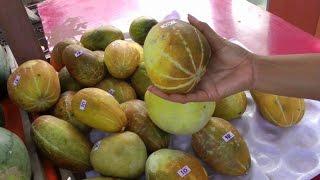 Tang Thai Muskmelon   Cucumis melo L.   HD Video