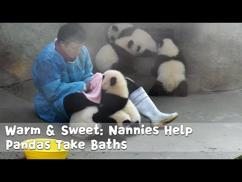 Warm & Sweet: Nannies Help Pandas Take Baths | iPanda