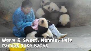 飼育員さんはお仕事中だけど…。かまってほしくて仕方ない!甘えん坊パンダが可愛すぎる♪