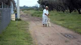 Perro de Juan Manuel Oliva Martinez