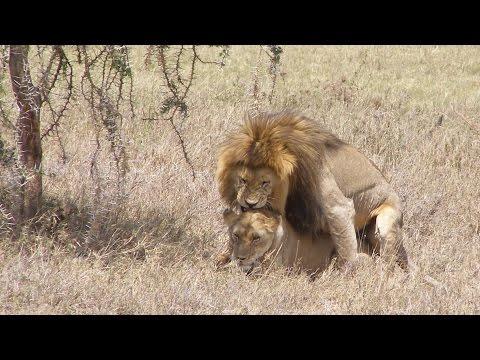 Awesome Serengeti morning safari, Tanzania 2011