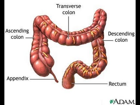 Anatomy of Intestines - YouTube
