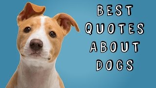 Best Quotes About Dogs