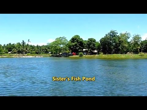Milkfish Fingerlings | Amazing View Of Fish Pond | Milkfish Farm | OTIKTV