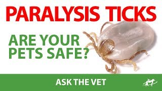Paralysis Ticks- Are Your Pets Safe?- Companion Animal Vets