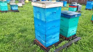 Пчеловодство Тюменской области
