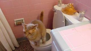Orlando dog training toilet trains a cat
