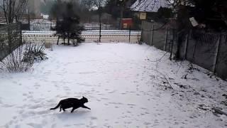 Śmieszny kot - polowanie - POMYSŁY KOTA - ZIMA
