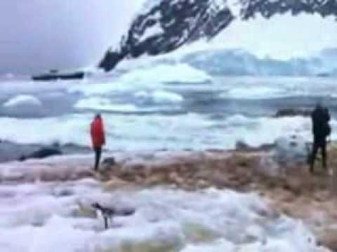 Glacier Collapses Into Ocean    Video