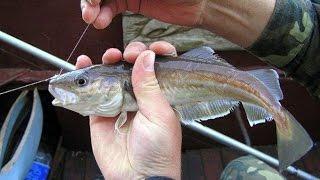 Рыбалка в черном море , ловля голяка , ловля сатвриды(моя работа здесь http://griunder.ru/, 2016-06-21T20:33:03.000Z)