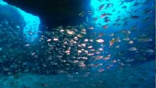 Islas Canarias bajo el mar / The Canary Islands under the sea