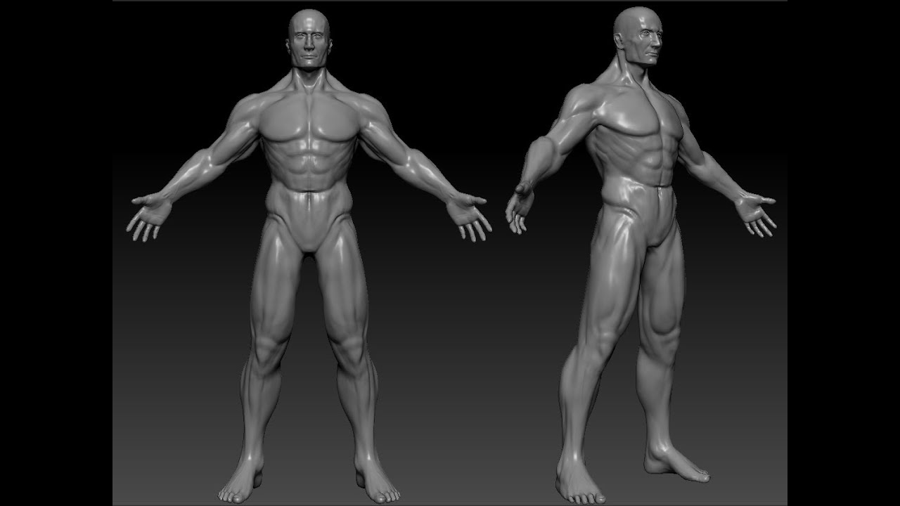 Human Body Sculpt On Zbrush Youtube