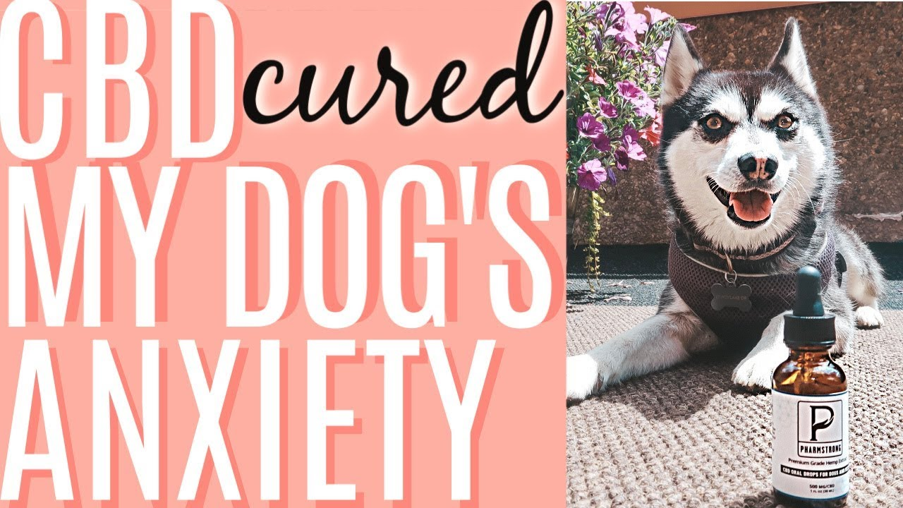 CBD FOR DOGS | CBD CURED MY DOG'S ANXIETY