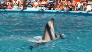 Сочи Парк.  Дельфинарий.  10 июня 2016 года.(В Сочи Парке работает дельфинарий. Ссылка на материал: https://www.sochipark.ru/delfinariy., 2016-06-20T18:01:23.000Z)