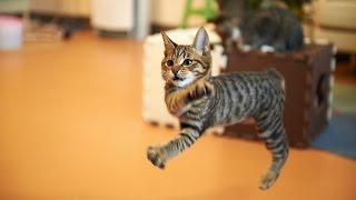 Коты в слоу мо 1,500fps #2!