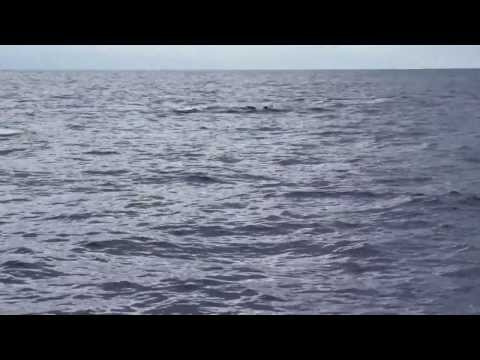 Humpback Big Island #15