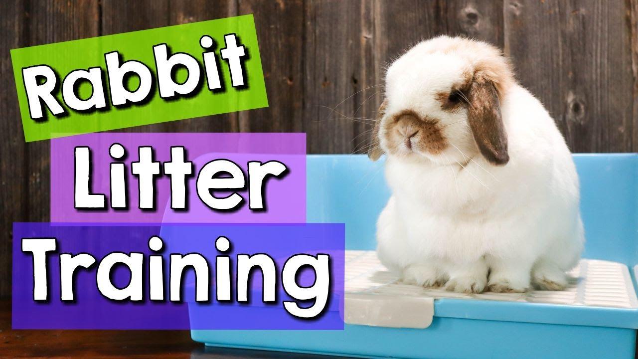 8 Rabbit Litter Training Tips & BEST Litter Boxes!