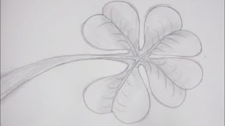 How to Draw and Sketch a Clover Leaf using Pencil