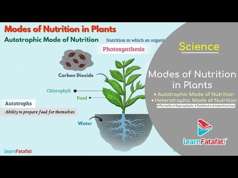 Nutrition In Plants Class 7 Science | Modes Of Nutrition In Plants - Autotrophic And Heterotrophic