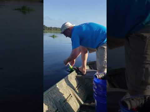 Fisher - That's Not A Catfish!  Watch What This Fisherman Reels In
