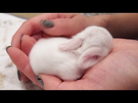 Newborn Baby Bunnies Snuggle and Sleep