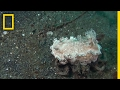 Watch a Crab Kidnap a Sea Slug to Avoid Being Eaten   National Geographic
