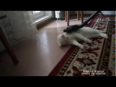 iFun ru video Kot prosit chtoby ego propylesosili