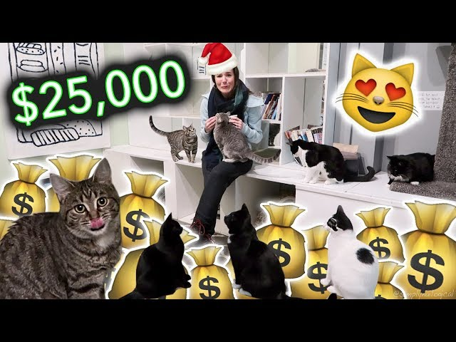 GIVING $25,000 TO CATS FOR CHRISTMAS!