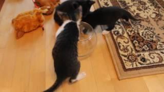 Котята в вазе)