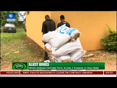 NDLEA Arrests 2 Suspected Cannabis Farmers In Osun State