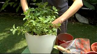 Using a Greenbo Planter: As Simple As ABC.mpg